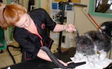 Pet Grooming Guilford Connecticut
